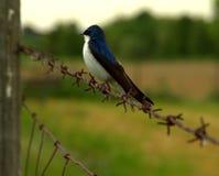 Sorso di albero appollaiato, profilo Fotografia Stock Libera da Diritti