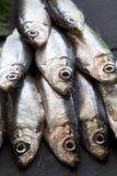 Sort d'anchois Images libres de droits