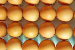 Sort d'oeufs dans une rangée, vue de plan Photographie stock