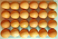 Sort d'oeufs dans une rangée, vue de plan photos stock
