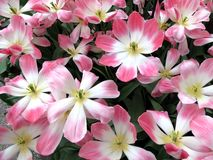 Sort de fleur Images libres de droits