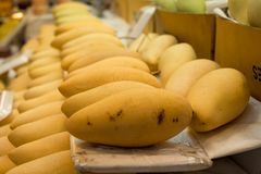 Sort de mangue mûre de ferme de récolte Images stock