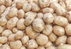 Sort du produit organique jaune de pomme de terre prêt pour faire cuire sur le marché de produits frais Images stock