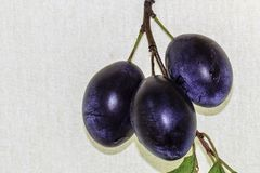 Sort of Gorka. Three plums on a branch with leaves Stock Photography
