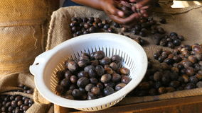 Sort of nutmeg, handwork stock footage