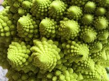 Romanesco in detail stock images