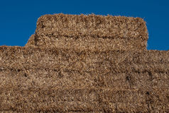 Sorted hay. After mowing wheat stock photography