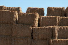 Sorted hay-3. Sorted hay after mowing wheat royalty free stock photography