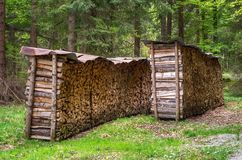 Sorted wood log under a shed. Stack of arranged brown wood log in the middle of a forest Royalty Free Stock Image