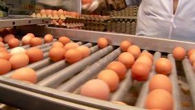 Sortera för ägg stock video