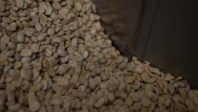 Sortera och gradera kaffebönan stock video
