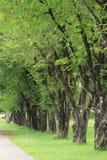 sortering av treen Arkivfoton