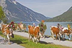 Sortie de bétail Image libre de droits
