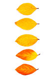 Sortieren Sie vom unterschiedlichen Herbstlaub, der auf weißem Hintergrund lokalisiert wird Stockfotos
