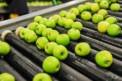 Sortierende und verpackende Äpfel Stockfoto