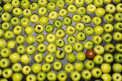 Sortierende und verpackende Äpfel Stockfotografie