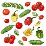 Sortiert vom Gemüse Rote, grüne und gelbe Tomaten, Gurken und Pfeffer lokalisiert auf weißem Hintergrund Ganzes und geschnittenes lizenzfreie abbildung