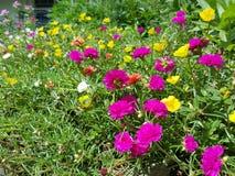 Sortierte Blumen Stockfotos