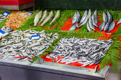 Sortierte Fische am Markt für Verkauf Stockfotos
