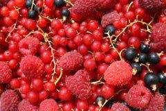 Sortierte Früchte Stockbilder