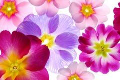 Sortierte Frühlings-Blumen Lizenzfreie Stockfotos