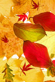 Sortierte Herbst-Blätter Stockfoto
