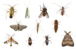 Sortierte Insekte getrennt auf Weiß Lizenzfreie Stockfotografie