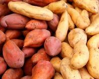 Sortierte Kartoffeln Stockbild