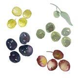 Sortierte Oliven stellten Illustration ein lizenzfreie abbildung