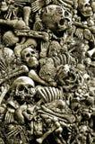Sortierte Schädel und Knochen Stockbild