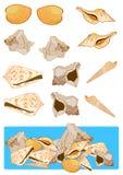 Sortierte Shells Lizenzfreie Stockfotografie