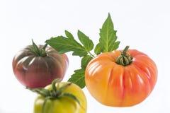Sortiertes Tomatenerbstück lokalisiert auf Weiß Stockbilder