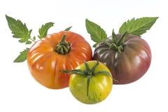 Sortiertes Tomatenerbstück lokalisiert auf Weiß Lizenzfreie Stockfotos