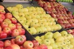 Sortiment av äpplevariationer royaltyfri bild
