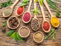 Sortiment av färgrika kryddor i träskedarna fotografering för bildbyråer