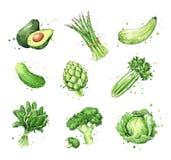 Sortiment av gröna foods, vattenfärgvegtablesillustration stock illustrationer