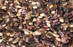 Sortiment av mångfärgade bönor, färgrika haricotbönor bakgrund, bästa sikt Olika bönor för torkad skidfrukt för bakgrund Wallpape royaltyfria bilder