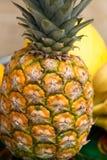 Sortiment av nya exotiska frukter Royaltyfria Bilder