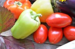 Sortiment av nya frukter och grönsaker höstplockninggrönsaker - söt peppar för auberginetomatzucchini royaltyfri fotografi