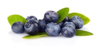 Sortiment av nya isolerad vit för blåbär sidor Royaltyfri Fotografi