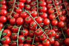 Sortiment av små körsbärsröda tomater på marknad Organisk ny veg arkivfoton