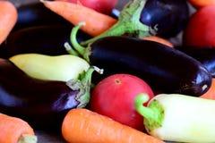 Sortiment för rå grönsaker Naturliga aubergine, tomater, morötter, peppar, persiljabakgrund sund vegetarian för mat closeup Royaltyfri Foto