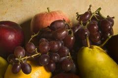 sortimentfrukter fotografering för bildbyråer