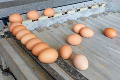 Sorting eggs closeup detail tool. Art royalty free stock image