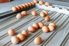 Sorting eggs closeup detail tool. Art stock images