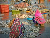 Sorting fish on a Gujarati quayside Stock Photos