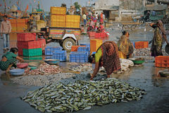 Sorting fish on an Indian quayside Royalty Free Stock Images