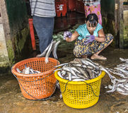 Sorting the fish Royalty Free Stock Images