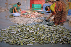 Sorting fish on a quayside in Gujarat Stock Photography