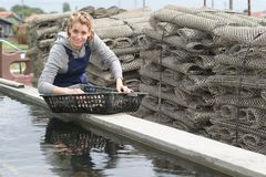 Sorting the fresh catch. Work Royalty Free Stock Photography